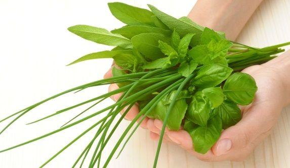 Albaha Planta Medicinal
